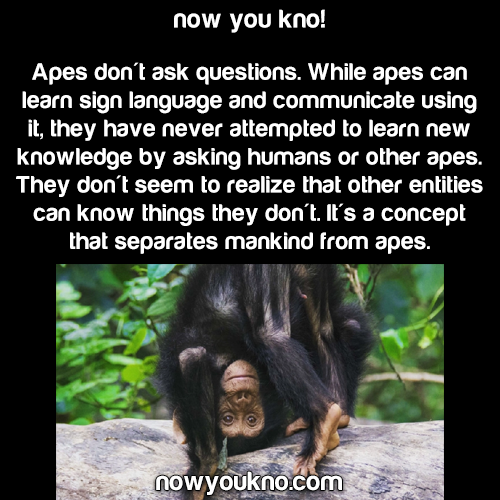 Apes don't ask questions
