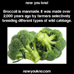 Broccoli is manmade