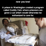 Cuddly Catz Prison Program