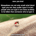 Mosquitoes prefer Type O blood