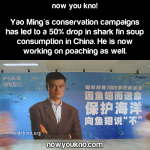 Yao Ming vs. Shark Fin Business