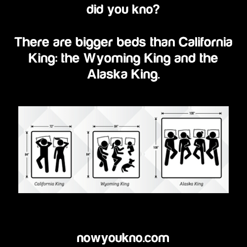 Beds bigger than the California King   NowYouKno