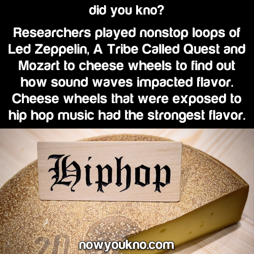 "Hip-hop cheese the ""funkiest"""