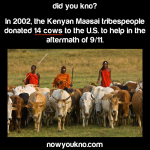 Kenyan tribe donated 14 cows after 911
