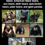 The history of the word 'bear'