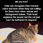 Cats ignore their owners