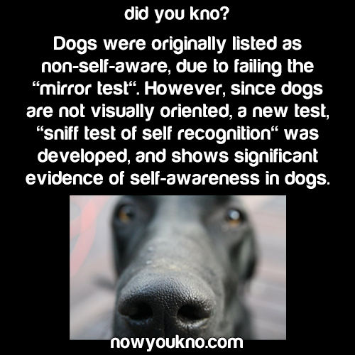 Sniff test shows dogs are self-aware