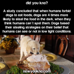 Dogs more likely to steal food in the dark