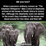 Elephant Whisperer mourned by elephants