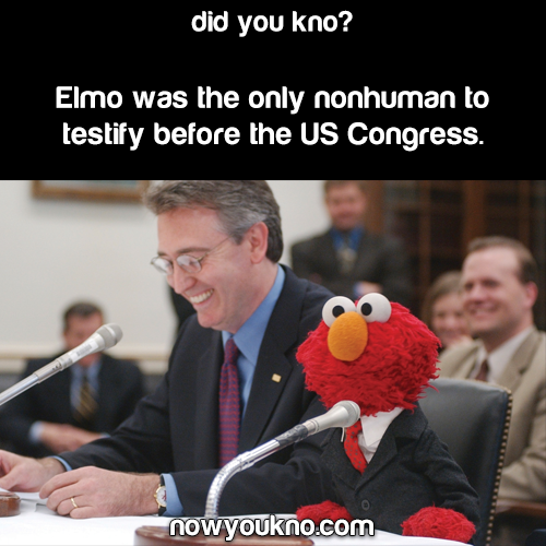 Elmo in Court