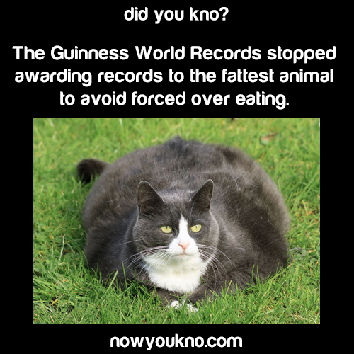 Guiness bans fattest animals records