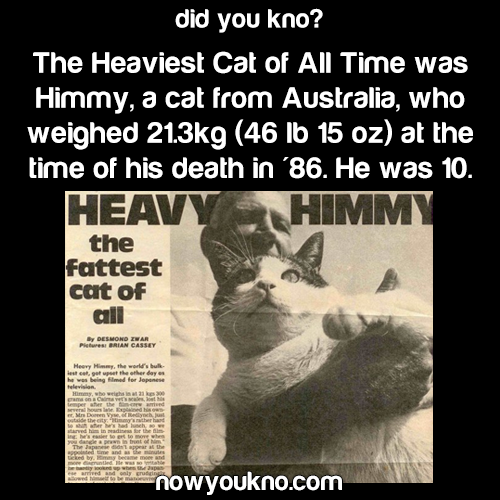 The Heaviest Cat of All Time
