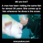 Man visits same fish for 30 years