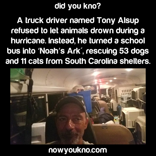 "Man turns a school bus into ""Noah's Ark"""