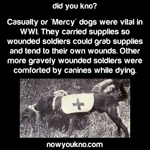 WWI Mercy Dogs