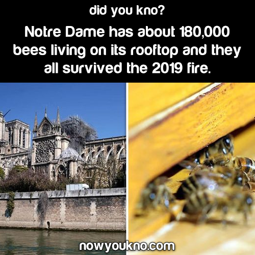 Bees survived Notre Dame fire