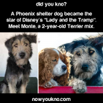 Shelter dog becomes Disney star