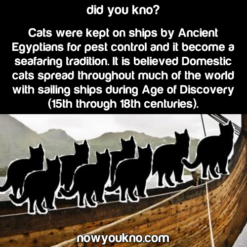 Cats have been kept on ships for 100's of years