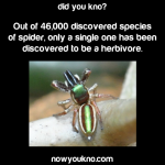Spiders can be Herbivores