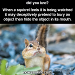 Superb Squirrel Facts
